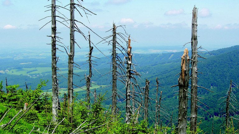 ImaginAIR: Forests in the Czech Republic still affected by air pollution